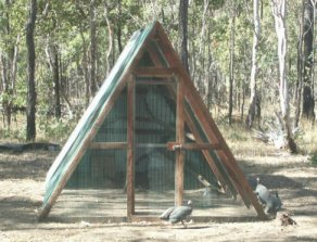 A-frame guinea house