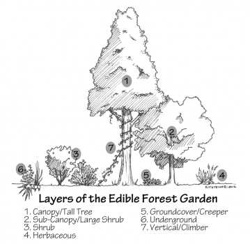 forest_garden_labeled1