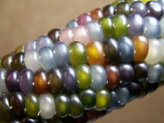 glass-corn-1-e1337100689837
