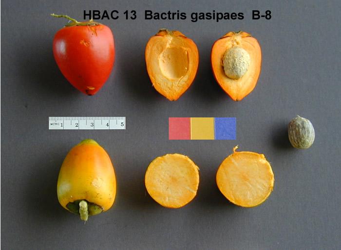 peach palm fruit
