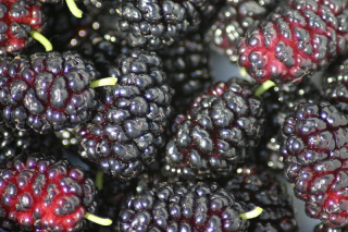 800px-mulberry_1