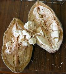 baobab_frucht